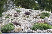 Steingarten aus Naturstein-Bruch vor Hecke, bepflanzt mit Steingartenstauden