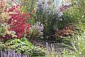 Verwunschene Gartenecke : Euonymus alatus
