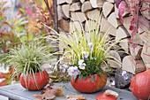 Ausgehoehlte Kürbisse (Cucurbita pepo) als Uebertoepfe : Carex (Segge)
