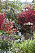 Verwunschene Gartenecke : kleiner Sitzplatz zwischen Euonymus alatus