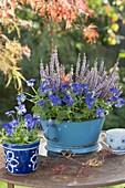 Emailliertes Küchen-Sieb mit Viola cornuta (Hornveilchen) und Calluna Garden