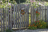 Mann baut Holz-Zaun mit Tor für Biogarten