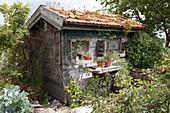 Verwunschenes, kleines Gartenhaus im Naturgarten, Dach bepflanzt mit Sempervivum (Hauswurz) und Sedum (Fetthenne), Rosa (Strauchrosen), Tontoepfe auf altem Naehmaschinengestell als Tisch in in selbstgebauten Kisten als Regale an der Wand