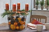 Drahtkorb mit Orangen, Mandarinen (Citrus) und Pinus (Kiefer), Zapfen