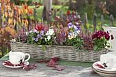 Korbkasten mit Calluna Garden Girls 'Liliane' (Knospenbluehender Besenheide)