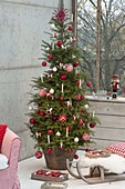 Lebende Koreatanne als Weihnachtsbaum nordisch rot-weiss geschmückt