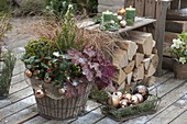 Winterfest bepflanzter Korb mit Ilex (Stechpalme), Heuchera