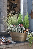 Kupferne Jardiniere weihnachtlich mit Calluna Garden Girls 'Helena'