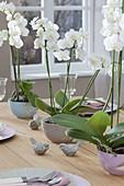 Tischdeko mit Phalaenopsis (Malayenblume, Schmetterlingsorchidee)