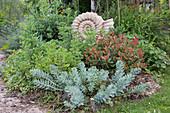 Kleines Beet mit verschiedenen Blattfarben gestaltet : Photinia fraseri 'Red Robin' (Glanzmispel), Euphorbia myrsinites (Walzen-Wolfsmilch), Chrysanthemum (Chrysantheme) und Sedum (Fetthenne), Terracotta - Ammonit als Deko
