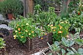 Hochbeete aus Haselruten mit Gemüse und Sommerblumen