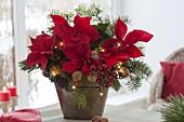 Weihnachtstrauss aus Euphorbia pulcherrima (Weihnachtsstern), Abies