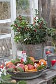 Nikolausteller vorm Gewaechshausfenster mit Schokoladen-Nikolaus, Äpfeln