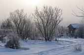 Spur durch den verschneiten Garten , Gehölze, Stauden und Gräser