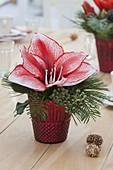 Kleines Tisch-Gesteck aus Blüte von Hippeastrum (Amaryllis)
