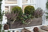 Holz - Kasten vorm Fenster winterlich bepflanzt mit Buxus (Buchs-Kugeln)