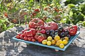 Frisch geerntete Tomaten (Lycopersicon) in verschiedenen Farben, Formen