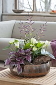 Kupferschale mit Zimmerpflanzen für den Schatten