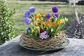 Kranz aus Trauerweide mit Primula denticulata (Kugelprimeln), Primula