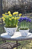 Konische Töpfe mit Narcissus 'Tete a Tete' (Narzissen) und Iris reticulata