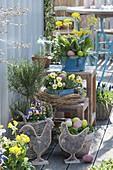 Frühlings -Terrasse mit Primula veris (Schluesselblumen), Viola cornuta