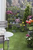 Balkon mit Frühjahrsblühern
