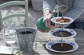 Keramiketagere mit Kresse und Sprossen als essbare Tischdeko