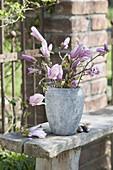 Zweige von Magnolia (Magnolie) in grauer Vase