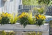 Bepflanzte Palette als Sichtschutz auf der Fruehlingsterrasse