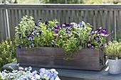 Holzkasten mit Kräutern und essbaren Blüten