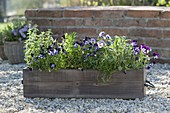 Holzkasten mit Kräutern und essbaren Blüten auf Kiesterrasse