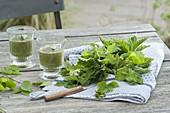 Green-Smoothie gegen Frühjahrsmüdigkeit : Aegopodium podagraria