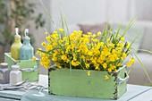 Straeusse aus Ranunculus acris (Butterblumen , Hahnenfuss) und Gräsern