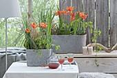 Tulpen im Wintergarten mit Gräsern und Blättern kombiniert