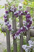 Herz aus hellen und dunklen Blüten von Syringa (Flieder)