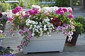 Weiss - rosa bepflanzter Holzkasten