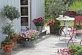 Terrasse mit Olea europaea (Olivenbaeumchen), Argyranthemum frutescens
