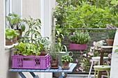 Kleiner Gemüsegarten auf dem Balkon