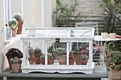 Kakteen und Sukkulenten in der Sommerfrische auf dem Balkon