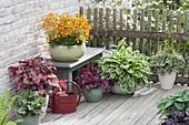 Terrasse mit Pflanzen für den Halbschatten