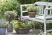 Körbe und Töpfe mit Kräutern und essbaren Blüten auf und an Bank