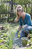 Frau streut Kalk im Gemüsegarten