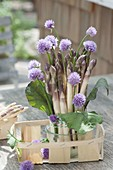 Strauss aus Spargel (Asparagus), Schnittlauch (Allium schoenoprasum)