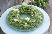 Kranz aus Raps (Brassica napus) mit unreifen Samenstaenden gebunden