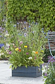 Sommerblumen - Wiese in Holzkasten