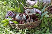 Korb mit frisch gepflückten und eingemachten Kirschen (Prunus)