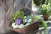 Korb mit frisch geernteten Kohlrabi (Brassica), Salat (Lactuca)