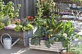 Fahrbarer Holzkasten mit Kohlrabi, Blumenkohl (Brassica), Mangold