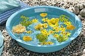 Türkise Schale mit gelben Blüten im Wasser schwimmend