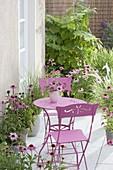 Kleine Terrasse mit Echinacea purpurea (Rotem Sonnenhut), Gräsern
